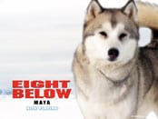 Eight Below Wallpapers